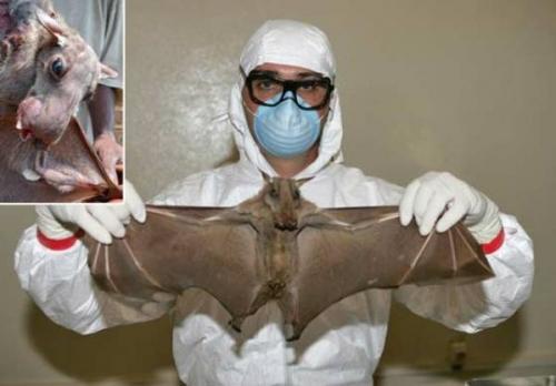 مرض فيروس إيبولا Ebola القاتل سمي سابقاً بحمى إيبولا النزفية هو مرض فيروسي  خطير يصيب الإنسان وبعض أنواع القرود وهو مرض معدي وتتصف بمعدلات إماتة عالية.